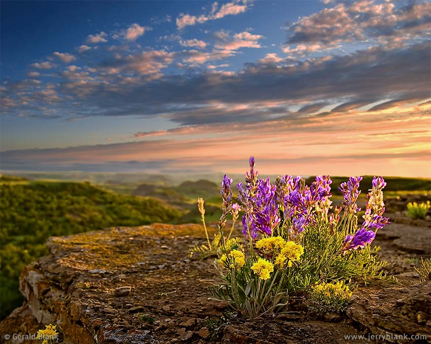 #00464 - Evening wildflowers above Ice Caves, Little Missouri National Grassland, Billings County, North Dakota - photo by Jerry Blank